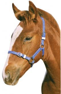 Foal/Mini Halter