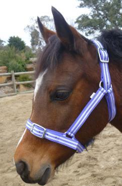 AAA Buzz Halters- Assorted Colours only