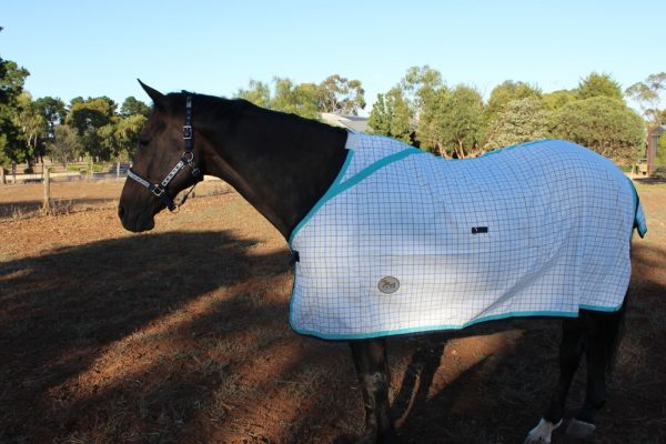 Heads To Tails~Cotton Check Set~Teal/Navy