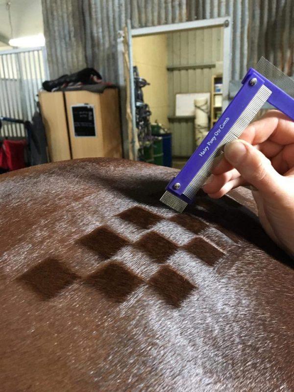 Hairy pony Quarter Comb